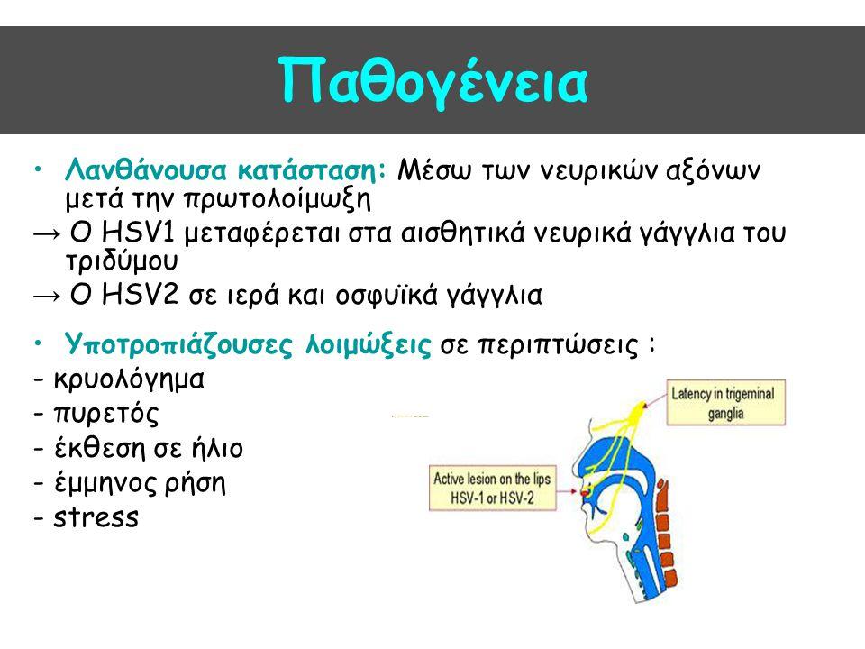 Παθογένεια Λανθάνουσα κατάσταση: Μέσω των νευρικών αξόνων μετά την πρωτολοίμωξη → Ο HSV1 μεταφέρεται στα αισθητικά νευρικά γάγγλια του τριδύμου → Ο HS