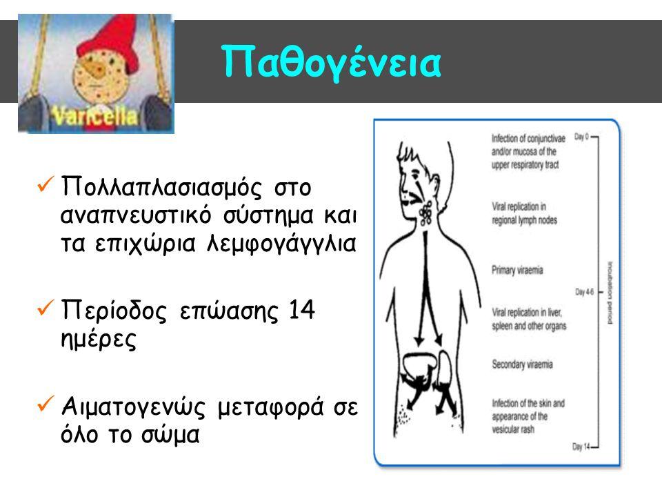 Παθογένεια Πολλαπλασιασμός στο αναπνευστικό σύστημα και τα επιχώρια λεμφογάγγλια Περίοδος επώασης 14 ημέρες Αιματογενώς μεταφορά σε όλο το σώμα