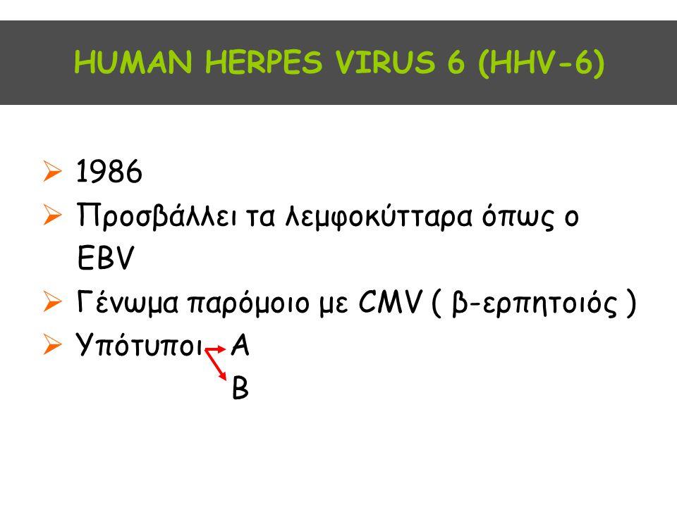 ΗUMAN HERPES VIRUS 6 (HHV-6)  1986  Προσβάλλει τα λεμφοκύτταρα όπως ο EBV  Γένωμα παρόμοιο με CMV ( β-ερπητοιός )  Υπότυποι Α Β