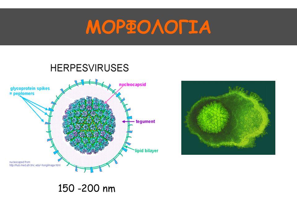 Ιοί απλού έρπητα Herpes Simplex Virus, HSV 2 τύποι: HSV 1: λοιμώξεις στόματος, οφθαλμών, νευρικού συστήματος και γεννητικών οργάνων HSV 2: λοιμώξεις γεννητικών οργάνων Πιθανότητα επικάλυψης
