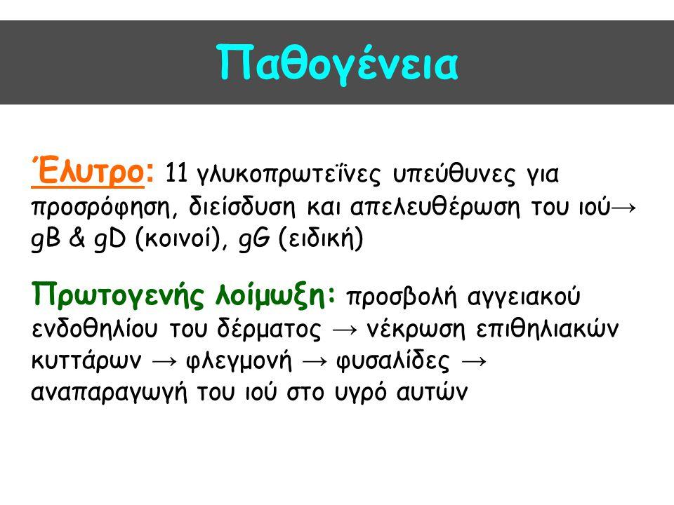 Παθογένεια Λανθάνουσα κατάσταση: Μέσω των νευρικών αξόνων μετά την πρωτολοίμωξη → Ο HSV1 μεταφέρεται στα αισθητικά νευρικά γάγγλια του τριδύμου → Ο HSV2 σε ιερά και οσφυϊκά γάγγλια Υποτροπιάζουσες λοιμώξεις σε περιπτώσεις : - κρυολόγημα - πυρετός - έκθεση σε ήλιο - έμμηνος ρήση - stress