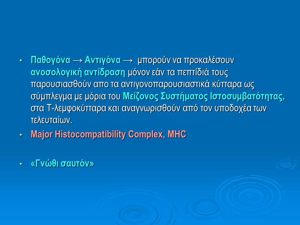 Αντιδράσεις που σχετίζονται με το Σύστημα HLA Μείζον Σύστημα Ιστοσυμβατότητας (MHC)  Στον άνθρωπο: αρχική περιγραφή στα λευκοκύτταρα → «Σύμπλεγμα λευκοκυτταρικών αντιγόνων του ανθρώπου» ( Human Leukocyte Antigens, HLA )  Περιέχει γονίδια τάξης Ι και τάξης ΙΙ  Αλλα γονίδια που σχετίζονται με την φυσική και ειδική ανοσιακή απάντηση → Καθοριστική σημασία στην ανοσιακή απάντηση → Αφορά την κλινική έκβαση της μεταμόσχευσης και τη προδιάθεση για ορισμένα αυτοάνοσα νοσήματα προδιάθεση για ορισμένα αυτοάνοσα νοσήματα