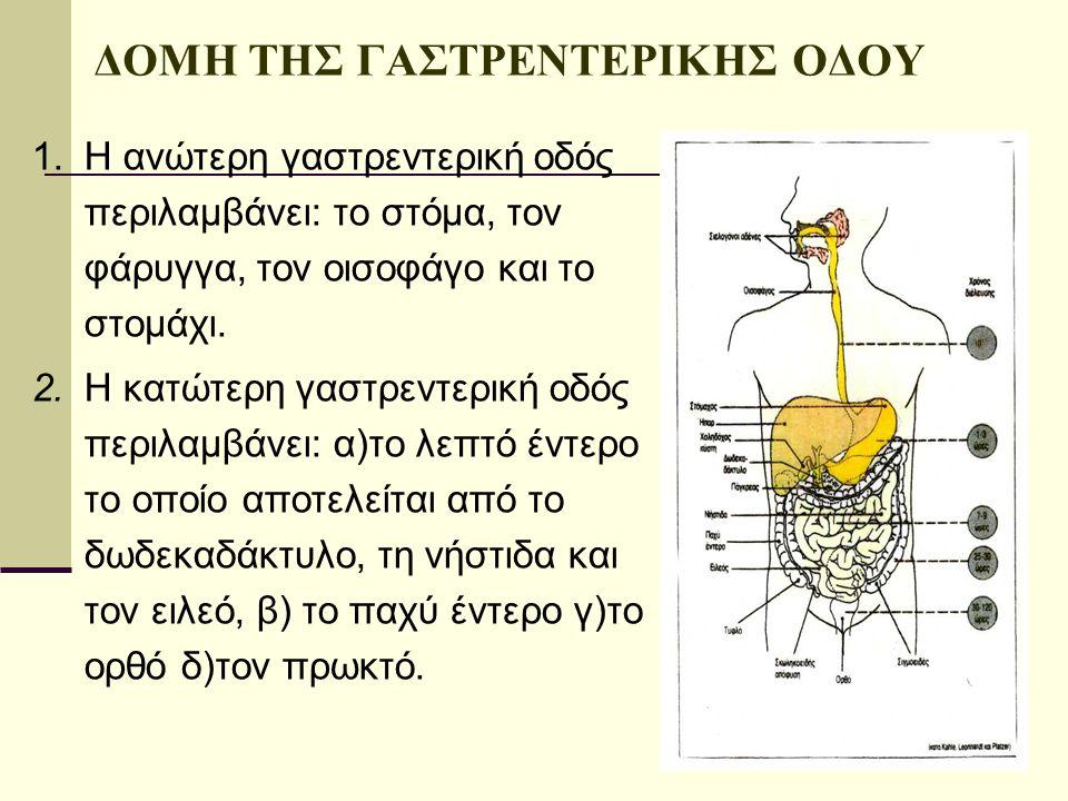 ΔΟΜΗ ΤΗΣ ΓΑΣΤΡΕΝΤΕΡΙΚΗΣ ΟΔΟΥ 1.Η ανώτερη γαστρεντερική οδός περιλαμβάνει: το στόμα, τον φάρυγγα, τον οισοφάγο και το στομάχι. 2.Η κατώτερη γαστρεντερι