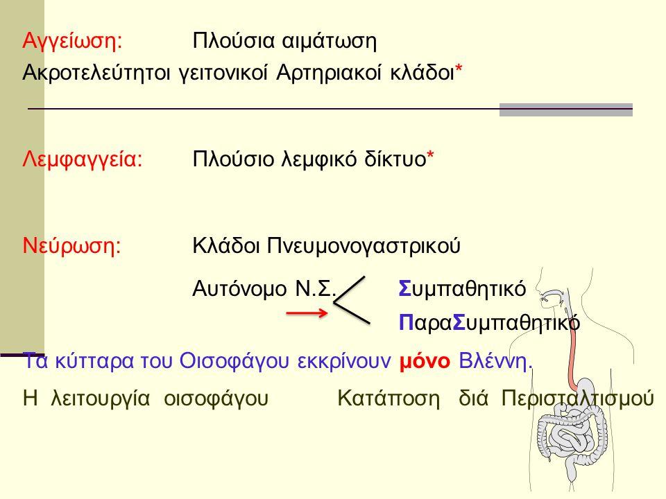 Αγγείωση:Πλούσια αιμάτωση Ακροτελεύτητοι γειτονικοί Αρτηριακοί κλάδοι* Λεμφαγγεία:Πλούσιο λεμφικό δίκτυο* Νεύρωση:Κλάδοι Πνευμονογαστρικού Αυτόνομο Ν.
