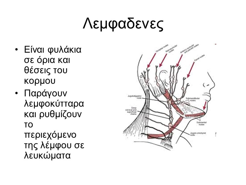 Λεμφαδένες Υπογνάθιοι Παρωτιδικοί (μπροστά κατω από το αυτί και τη μαστοειδή) Ινιακοί (βάση κρανίου) Τραχηλικοί Μασχαλιαίοι Παραμαστικοι Θωρακικοί και παραστερνικοι Αγκωνιαιοι Βουβωνικοί Ιγνυακοί