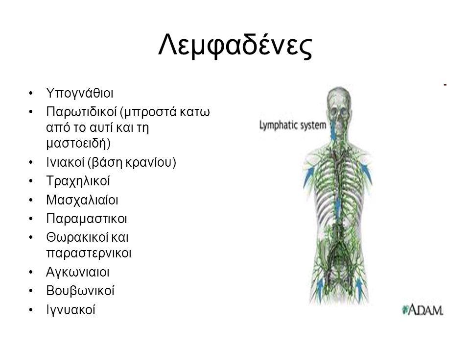 Λεμφοκύτταρα Τα λεμφοκύτταρα= επούλωση ιστών, πόλεμο των λοιμώξεων Εγκαταστημένα κυρίως στα λεμφικά όργανα Μέρος τους βρίσκεται σε κίνηση στο σώμα μέσω των λεμφικών οδών και των θωρακικών πόρων