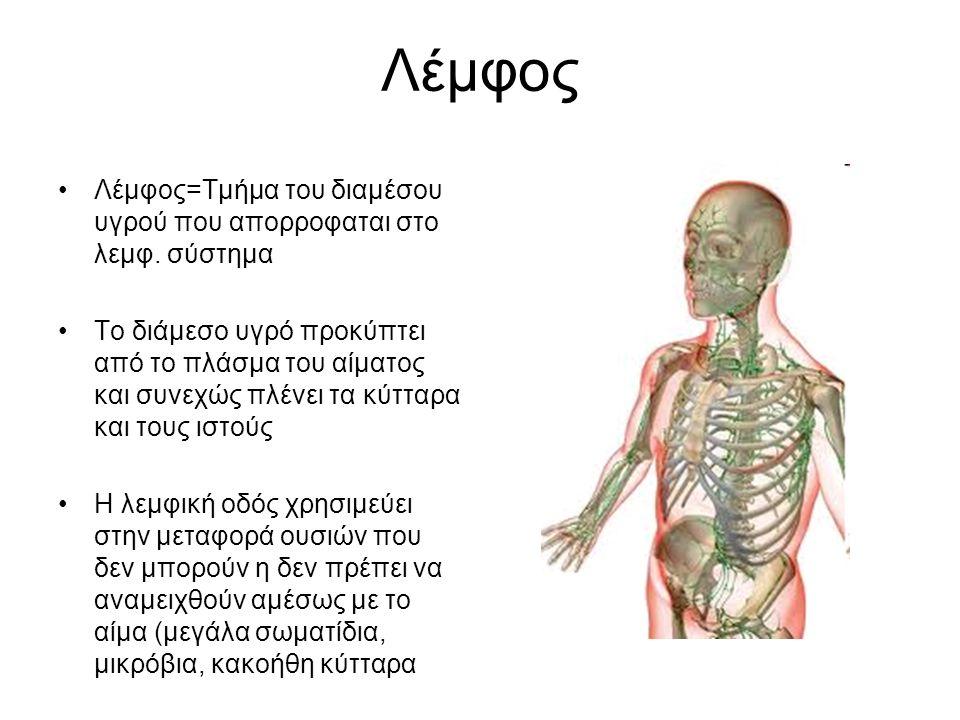 Λεμφαγγεία Στα λεμφαγγεία υπάρχουν βαλβίδες που επιτρέπουν την κίνηση της λέμφου μόνο σε μια κατεύθυνση Το τοίχωμα τους περιλαμβάνει λείες μυικες ίνες Η κίνηση της λέμφου εξαρτάται από: Την διαφορά πίεσης μέσα στο λεμφικό σύστημα Την συστολική κίνηση των λεμφαγγείων Την κίνηση του διαφραγματος Τις μυικες συσπάσεις και την αρτηριακή πίεση