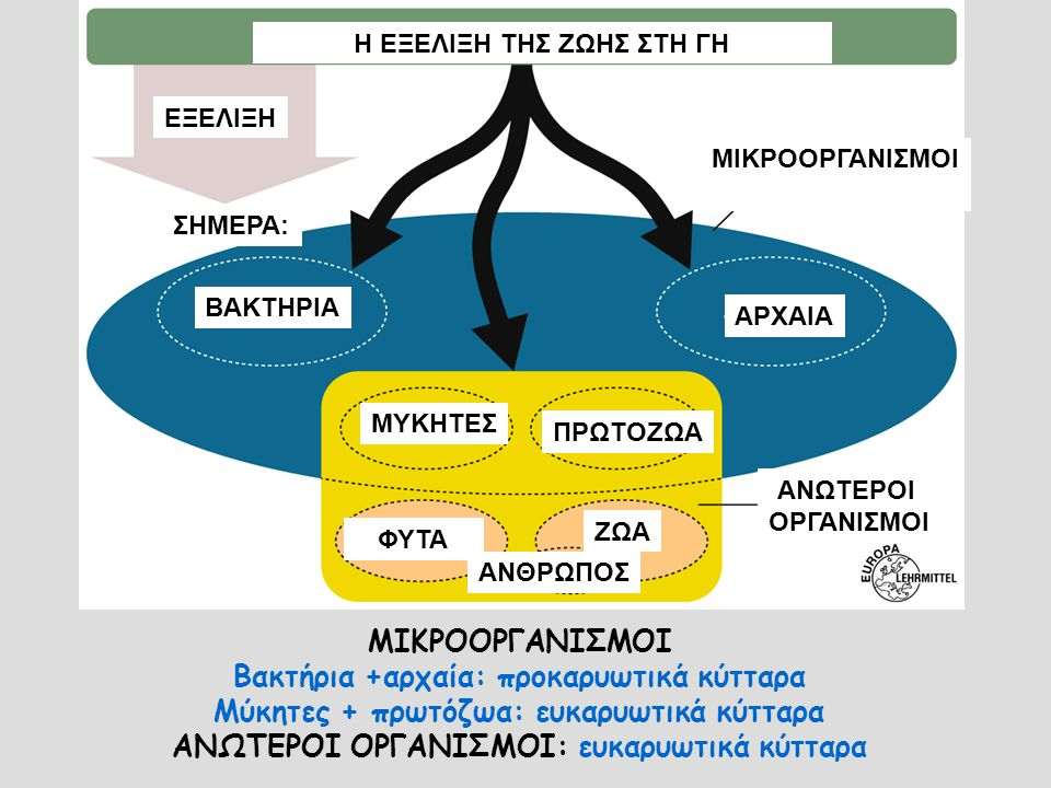 ΜΥΚΟΤΟΞΙΝΕΣ-παραδείγματα Φαλλοειδίνη, αμανατίνη: ισχυρές νευροτοξίνες που παράγονται από μανιτάρια Εργοταμίνη: παραισθησιογόνο, η φυσική πηγή του LSD (εργοτισμός κατά το Μεσαίωνα) Αφλατοξίνη: καρκινογόνος τοξίνη (φυστικοβούτυρο)