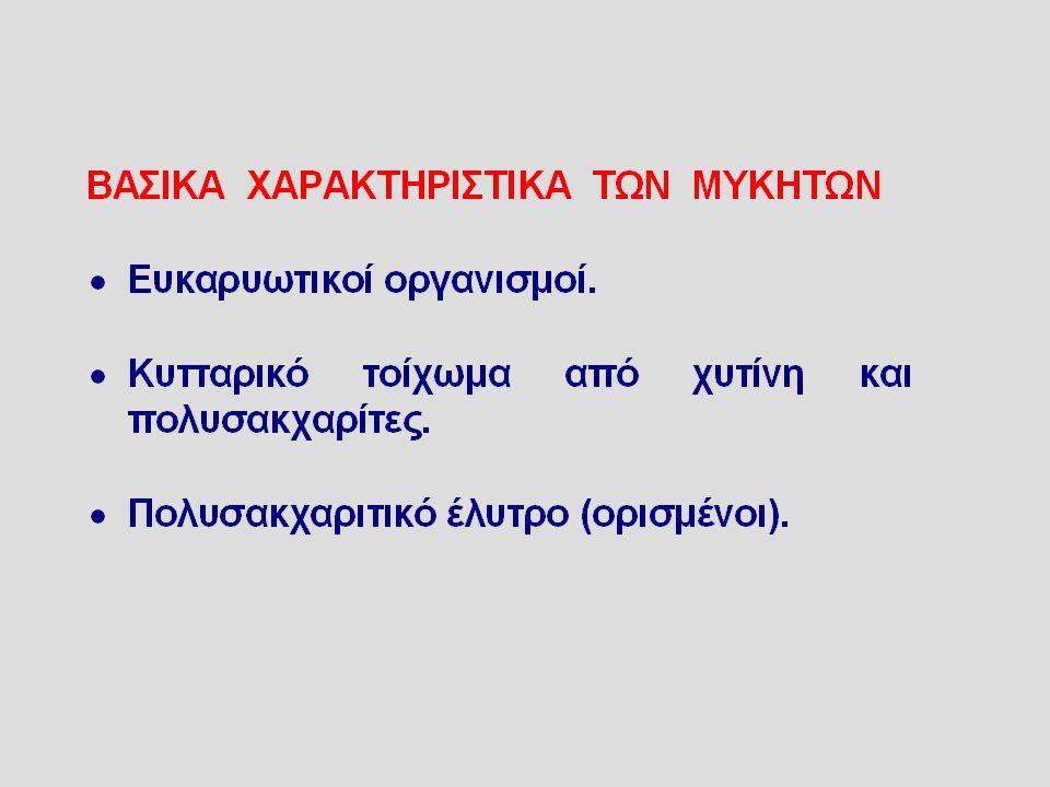 Δερματοφυτίαση περιγεννητικής περιοχής: γένος epidermophyton