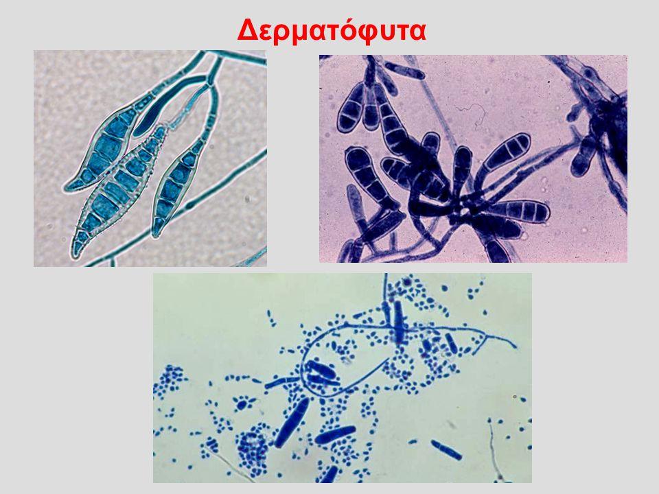 Αναπτύσσονται μεταβολίζοντας την κερατίνη που βρισκεται στα νύχια, στις τρίχες και στην κεράτινη στιβάδα του δέρματος