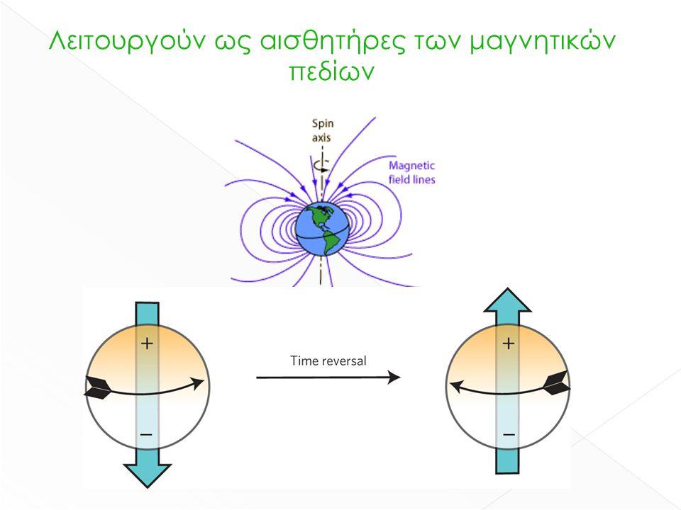 Λειτουργούν ως αισθητήρες των μαγνητικών πεδίων