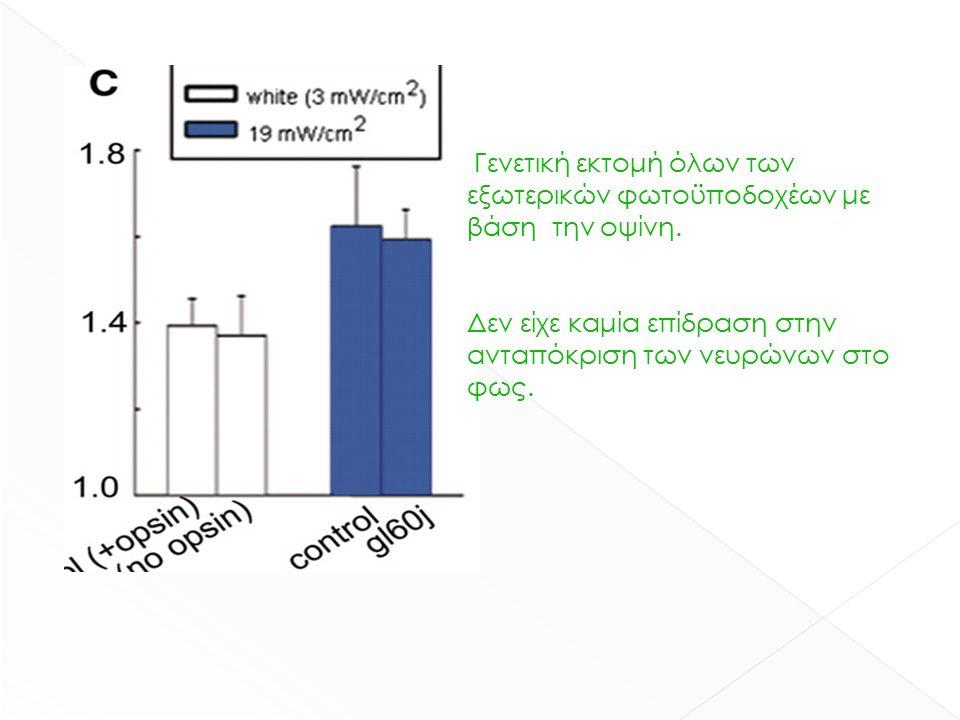 γενετική εκτομή όλων των εξωτερικών φωτοϋποδοχέων με βάση την οψίνη.
