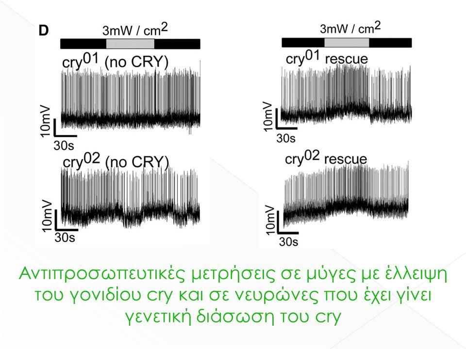 Αντιπροσωπευτικές μετρήσεις σε μύγες με έλλειψη του γονιδίου cry και σε νευρώνες που έχει γίνει γενετική διάσωση του cry