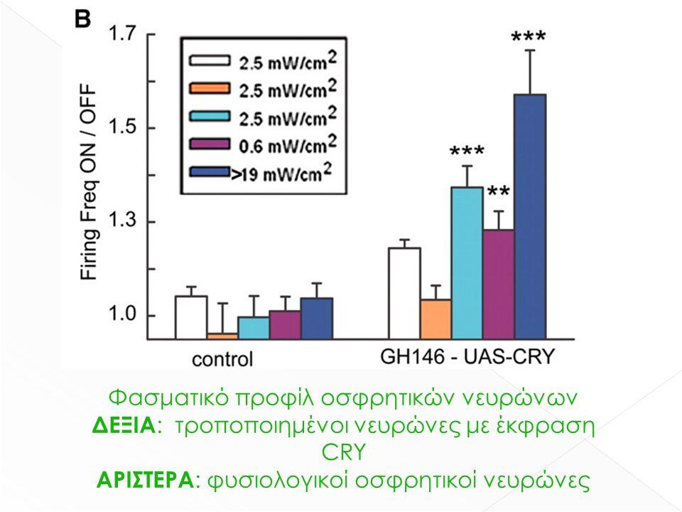 Φασματικό προφίλ οσφρητικών νευρώνων ΔΕΞΙΑ : τροποποιημένοι νευρώνες με έκφραση CRY ΑΡΙΣΤΕΡΑ : φυσιολογικοί οσφρητικοί νευρώνες