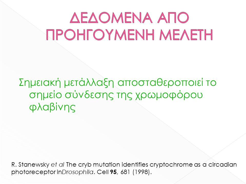 Σημειακή μετάλλαξη αποσταθεροποιεί το σημείο σύνδεσης της χρωμοφόρου φλαβίνης R.