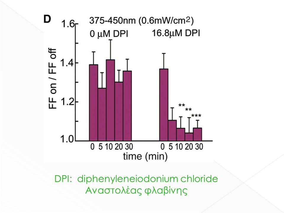 DPI: diphenyleneiodonium chloride Αναστολέας φλαβίνης