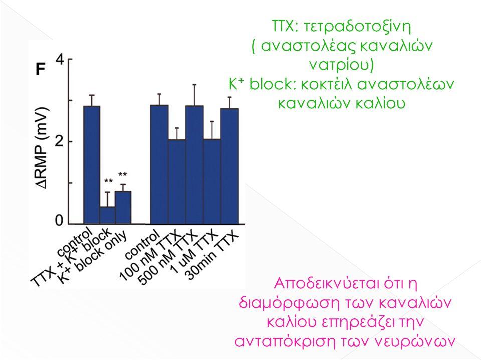 ΤΤΧ: τετραδοτοξίνη ( αναστολέας καναλιών νατρίου) Κ + block: κοκτέιλ αναστολέων καναλιών καλίου Αποδεικνύεται ότι η διαμόρφωση των καναλιών καλίου επηρεάζει την ανταπόκριση των νευρώνων