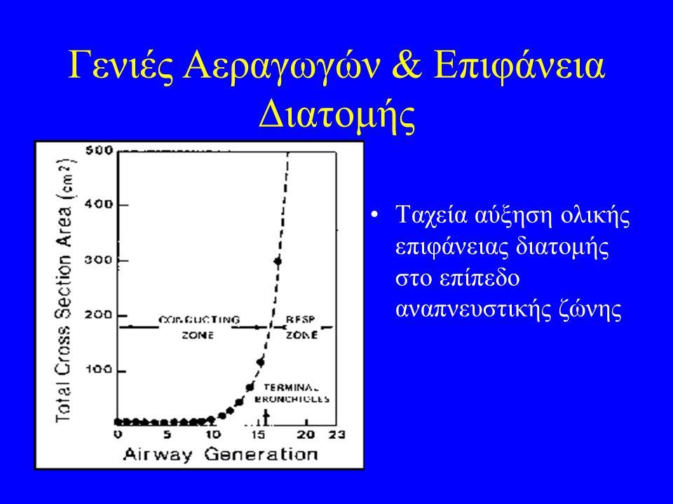 Γενιές Αεραγωγών & Επιφάνεια Διατομής Ταχεία αύξηση ολικής επιφάνειας διατομής στο επίπεδο αναπνευστικής ζώνης