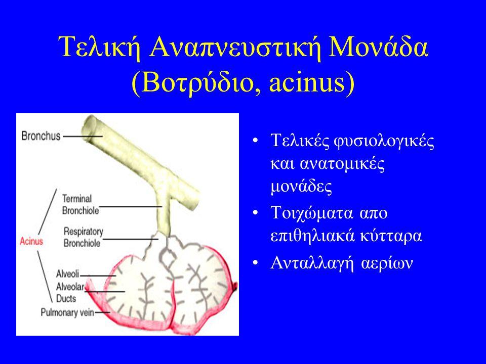 Τελική Αναπνευστική Μονάδα (Βοτρύδιο, acinus) Τελικές φυσιολογικές και ανατομικές μονάδες Τοιχώματα απο επιθηλιακά κύτταρα Ανταλλαγή αερίων