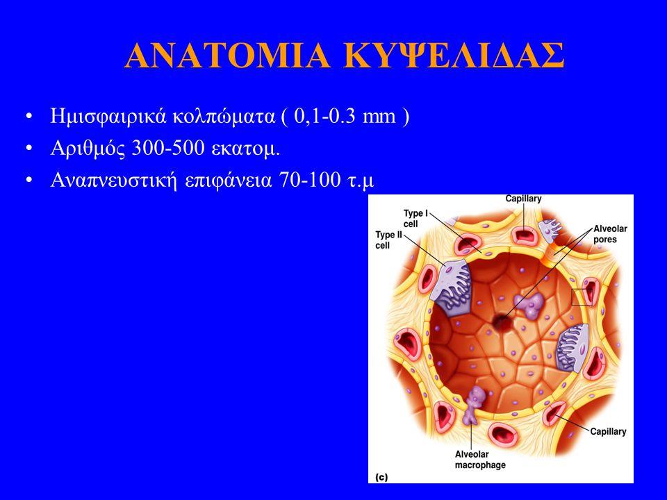 ΑΝΑΤΟΜΙΑ ΚΥΨΕΛΙΔΑΣ Ημισφαιρικά κολπώματα ( 0,1-0.3 mm ) Αριθμός 300-500 εκατομ. Αναπνευστική επιφάνεια 70-100 τ.μ