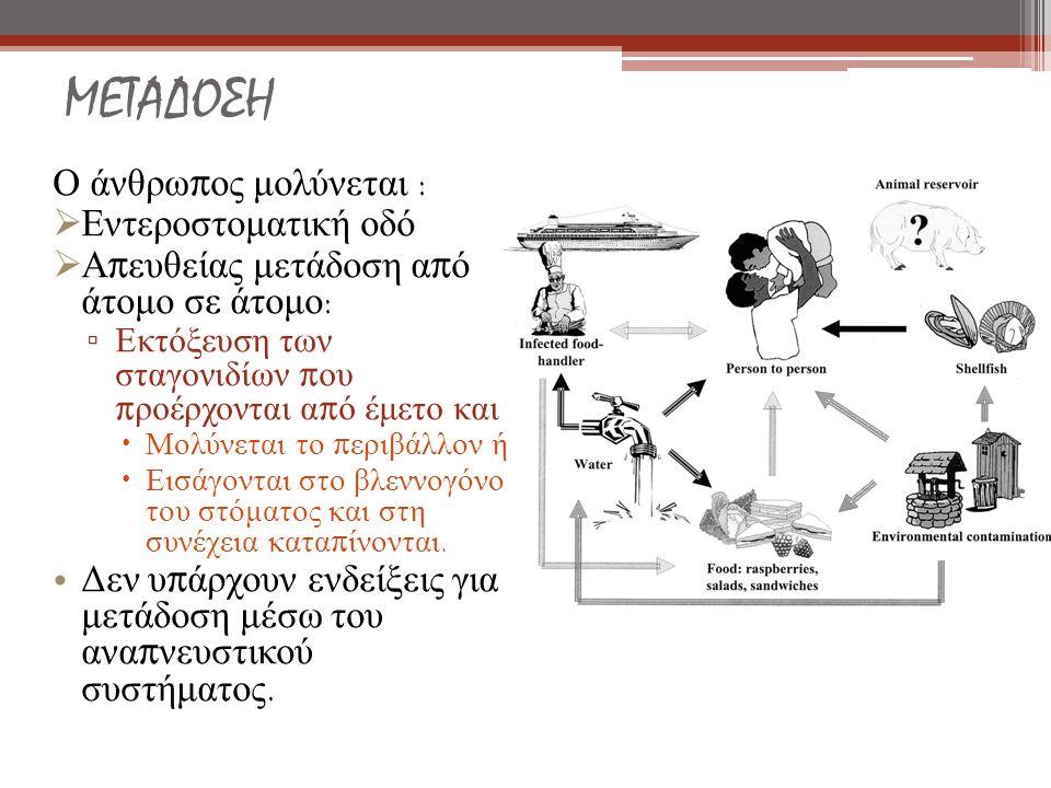 ΜΕΤΑΔΟΣΗ Ο άνθρω π ος μολύνεται :  Εντεροστοματική οδό  Α π ευθείας μετάδοση α π ό άτομο σε άτομο : ▫ Εκτόξευση των σταγονιδίων π ου π ροέρχονται α π ό έμετο και  Μολύνεται το π εριβάλλον ή  Εισάγονται στο βλεννογόνο του στόματος και στη συνέχεια κατα π ίνονται.
