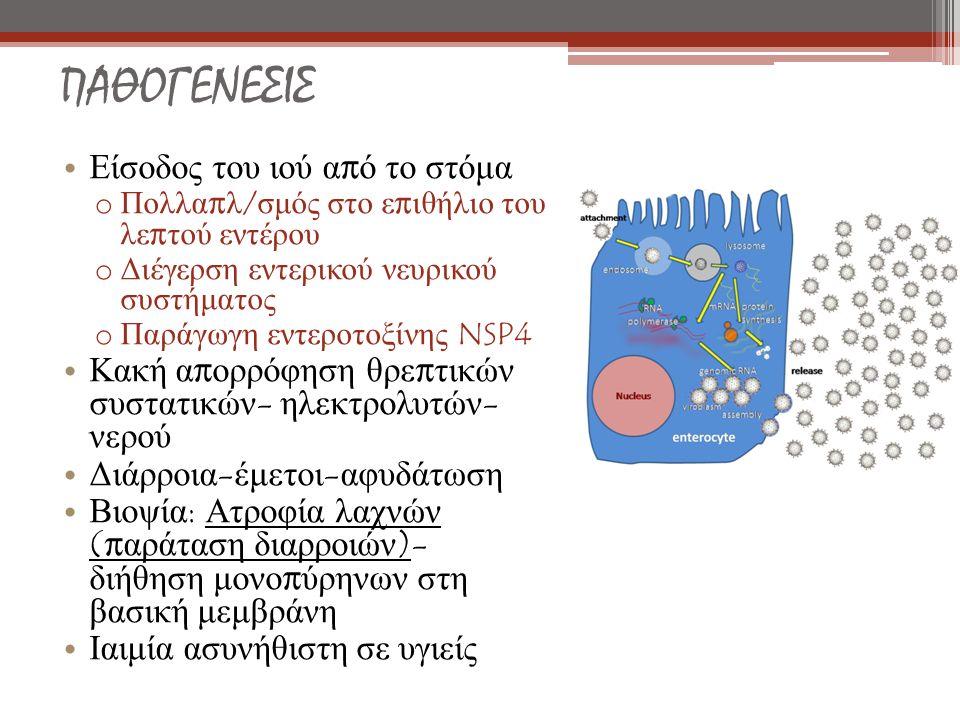 ΠΑΘΟΓΕΝΕΣΙΣ Είσοδος του ιού α π ό το στόμα o Πολλα π λ / σμός στο ε π ιθήλιο του λε π τού εντέρου o Διέγερση εντερικού νευρικού συστήματος o Παράγωγη εντεροτοξίνης NSP4 Κακή α π ορρόφηση θρε π τικών συστατικών - ηλεκτρολυτών - νερού Διάρροια - έμετοι - αφυδάτωση Βιοψία : Ατροφία λαχνών (π αράταση διαρροιών )- διήθηση μονο π ύρηνων στη βασική μεμβράνη Ιαιμία ασυνήθιστη σε υγιείς