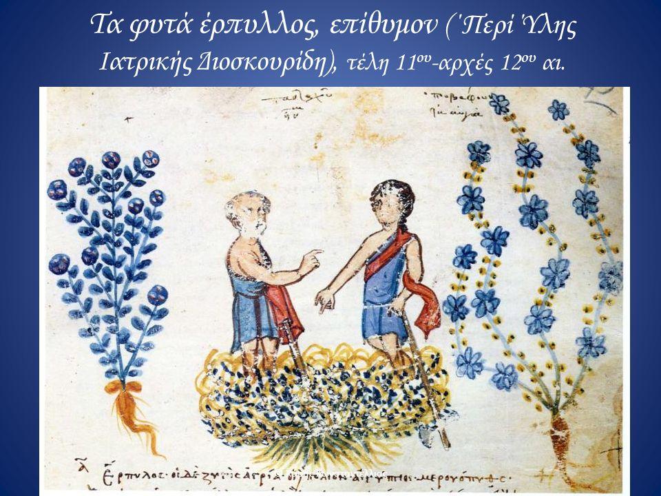 Τα φυτά έρπυλλος, επίθυμον (΄Περί Ύλης Ιατρικής Διοσκουρίδη), τέλη 11 ου -αρχές 12 ου αι. © Χάρης Κωνσταντέλλιας