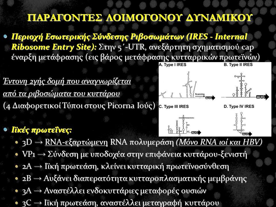 ΠΑΡΑΓΟΝΤΕΣ ΛΟΙΜΟΓΟΝΟΥ ΔΥΝΑΜΙΚΟΥ Περιοχή Εσωτερικής Σύνδεσης Ριβοσωμάτων (IRES - Internal Ribosome Entry Site): Στην 5΄-UTR, ανεξάρτητη σχηματισμού cap