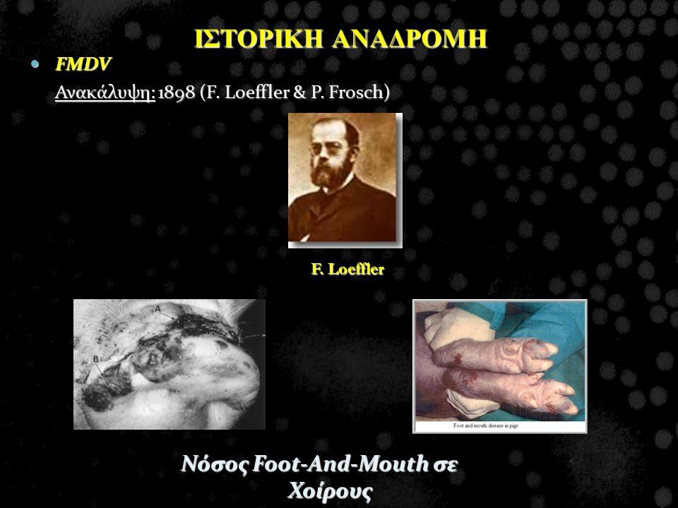 ΙΣΤΟΡΙΚΗ ΑΝΑΔΡΟΜΗ FMDV FMDV Ανακάλυψη: 1898 (F. Loeffler & P. Frosch) Νόσος Foot-And-Mouth σε Χοίρους F. Loeffler