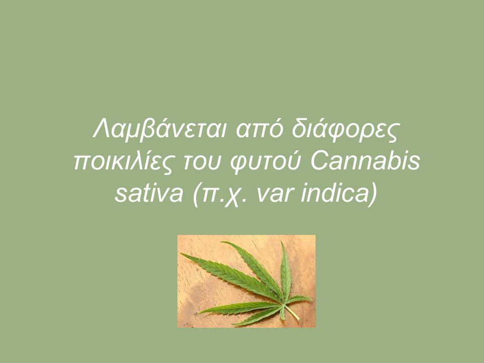 Λαμβάνεται από διάφορες ποικιλίες του φυτού Cannabis sativa (π.χ. var indica)