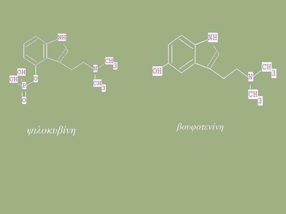 ψιλοκυβίνη βουφοτενίνη