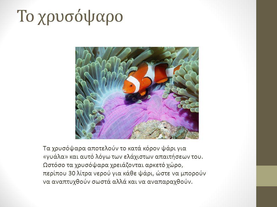 Το χρυσόψαρο Τα χρυσόψαρα αποτελούν το κατά κόρον ψάρι για «γυάλα» και αυτό λόγω των ελάχιστων απαιτήσεων του.