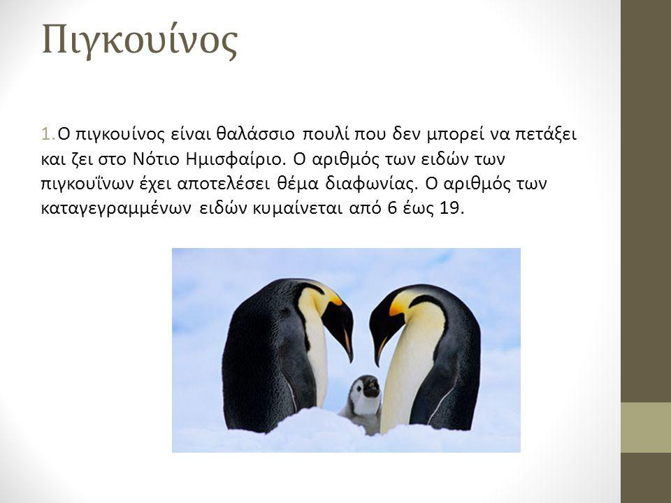 Πιγκουίνος 1.Ο πιγκουίνος είναι θαλάσσιο πουλί που δεν μπορεί να πετάξει και ζει στο Νότιο Ημισφαίριο.