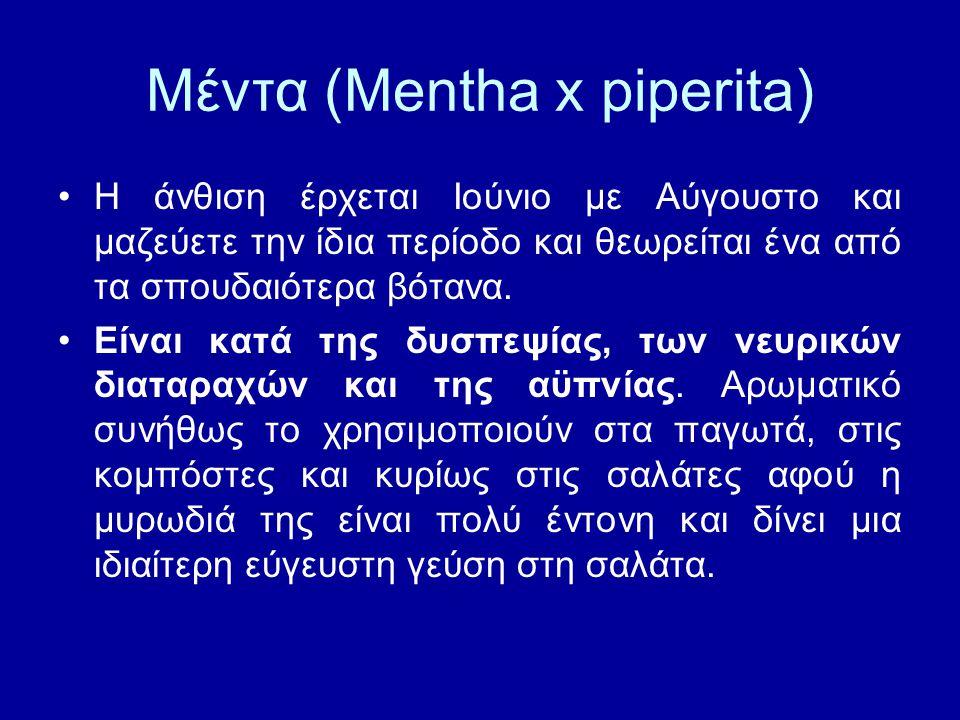 Μέντα (Mentha x piperita) Η άνθιση έρχεται Ιούνιο με Αύγουστο και μαζεύετε την ίδια περίοδο και θεωρείται ένα από τα σπουδαιότερα βότανα. Είναι κατά τ