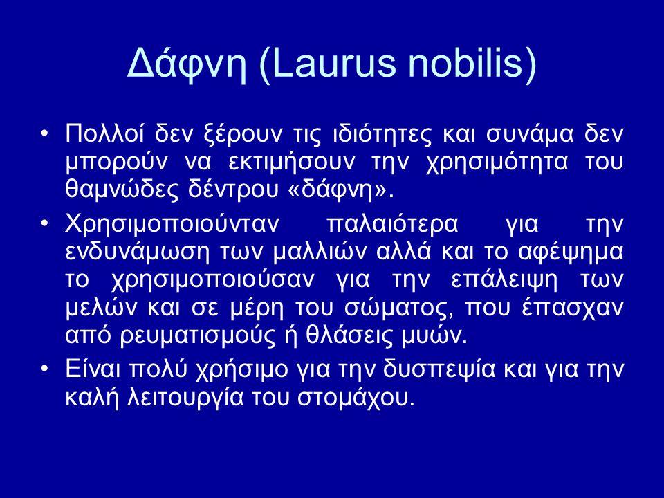 Δάφνη (Laurus nobilis) Πολλοί δεν ξέρουν τις ιδιότητες και συνάμα δεν μπορούν να εκτιμήσουν την χρησιμότητα του θαμνώδες δέντρου «δάφνη». Χρησιμοποιού
