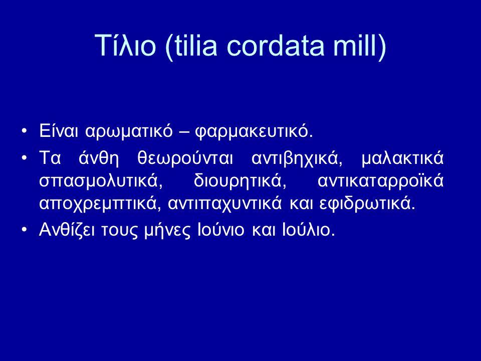 Τίλιο (tilia cordata mill) Είναι αρωματικό – φαρμακευτικό. Τα άνθη θεωρούνται αντιβηχικά, μαλακτικά σπασμολυτικά, διουρητικά, αντικαταρροϊκά αποχρεμπτ