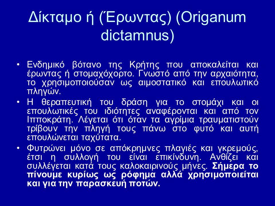 Δίκταμο ή (Έρωντας) (Origanum dictamnus) Ενδημικό βότανο της Κρήτης που αποκαλείται και έρωντας ή στομαχόχορτο. Γνωστό από την αρχαιότητα, το χρησιμοπ