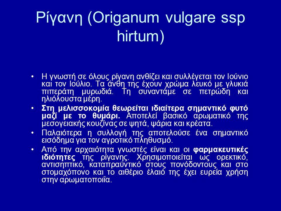 Ρίγανη (Origanum vulgare ssp hirtum) Η γνωστή σε όλους ρίγανη ανθίζει και συλλέγεται τον Ιούνιο και τον Ιούλιο. Τα άνθη της έχουν χρώμα λευκό με γλυκι