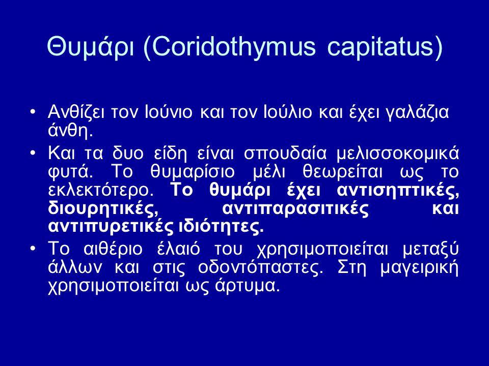 Θυμάρι (Coridothymus capitatus) Ανθίζει τον Ιούνιο και τον Ιούλιο και έχει γαλάζια άνθη. Και τα δυο είδη είναι σπουδαία μελισσοκομικά φυτά. Το θυμαρίσ