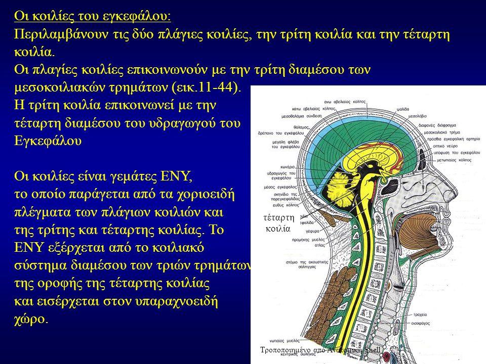 Οι κοιλίες του εγκεφάλου: Περιλαμβάνουν τις δύο πλάγιες κοιλίες, την τρίτη κοιλία και την τέταρτη κοιλία.