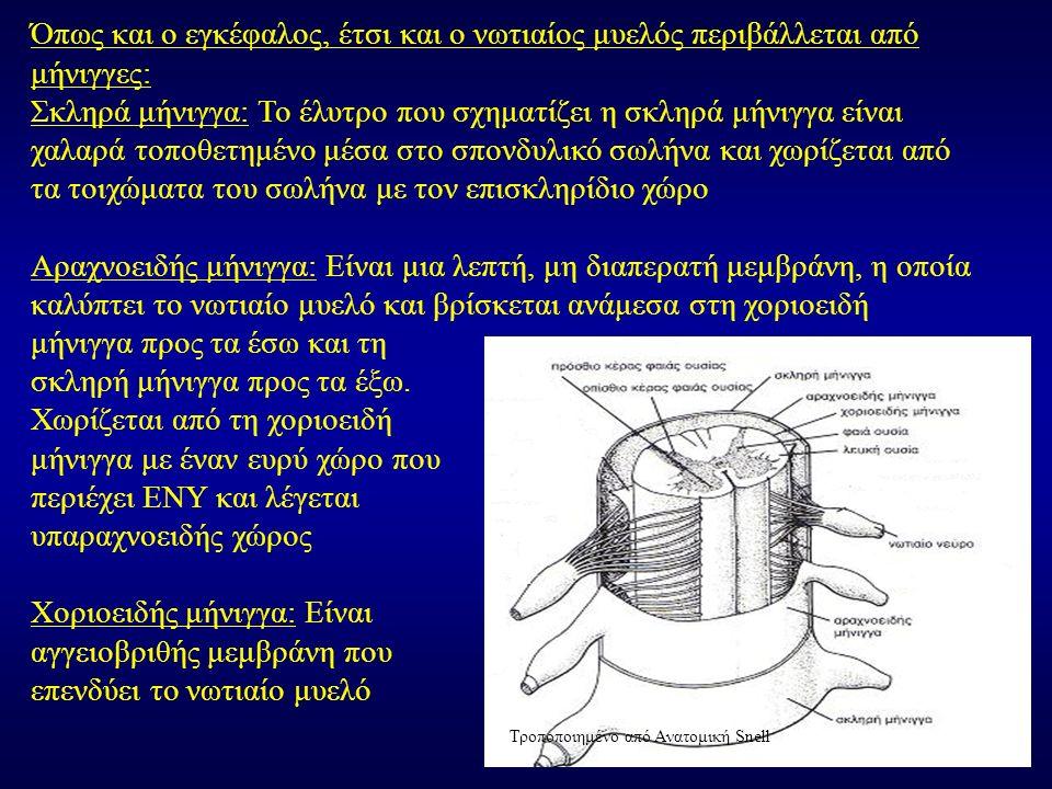 Όπως και ο εγκέφαλος, έτσι και ο νωτιαίος μυελός περιβάλλεται από μήνιγγες: Σκληρά μήνιγγα: Το έλυτρο που σχηματίζει η σκληρά μήνιγγα είναι χαλαρά τοποθετημένο μέσα στο σπονδυλικό σωλήνα και χωρίζεται από τα τοιχώματα του σωλήνα με τον επισκληρίδιο χώρο Αραχνοειδής μήνιγγα: Είναι μια λεπτή, μη διαπερατή μεμβράνη, η οποία καλύπτει το νωτιαίο μυελό και βρίσκεται ανάμεσα στη χοριοειδή μήνιγγα προς τα έσω και τη σκληρή μήνιγγα προς τα έξω.
