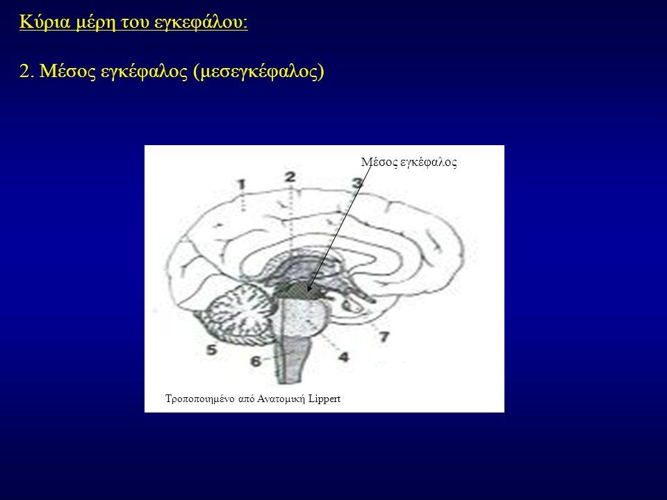 Κύρια μέρη του εγκεφάλου: 2.