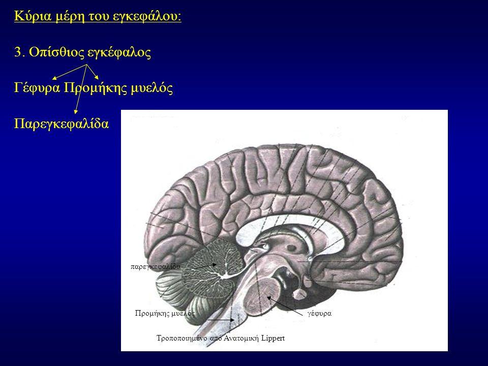 Κύρια μέρη του εγκεφάλου: 3.