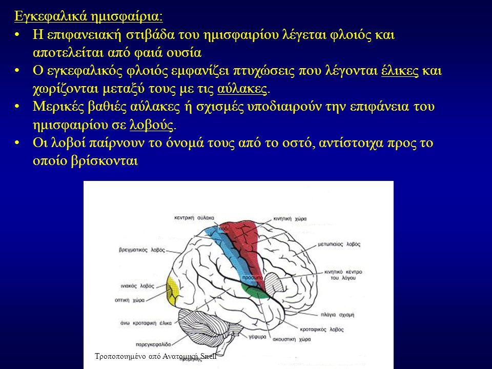 Εγκεφαλικά ημισφαίρια: Η επιφανειακή στιβάδα του ημισφαιρίου λέγεται φλοιός και αποτελείται από φαιά ουσία Ο εγκεφαλικός φλοιός εμφανίζει πτυχώσεις που λέγονται έλικες και χωρίζονται μεταξύ τους με τις αύλακες.