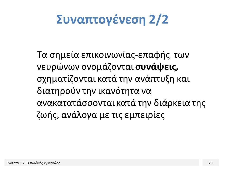 Ενότητα 1.2: Ο παιδικός εγκέφαλος-24- Συναπτογένεση 1/2