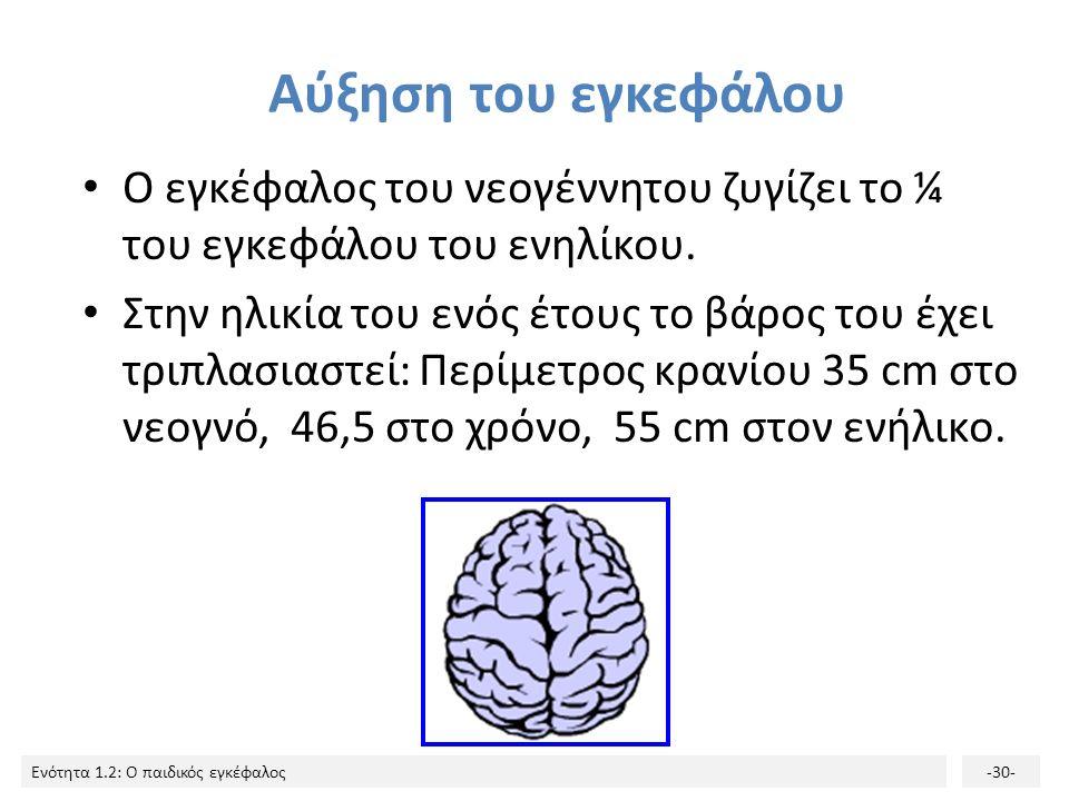 Ενότητα 1.2: Ο παιδικός εγκέφαλος-29- Η λειτουργία του στηρίζεται στην επικοινωνία ανάμεσα στους νευρώνες με τη μεσολάβηση των συνάψεων. Κάθε νευρώνας