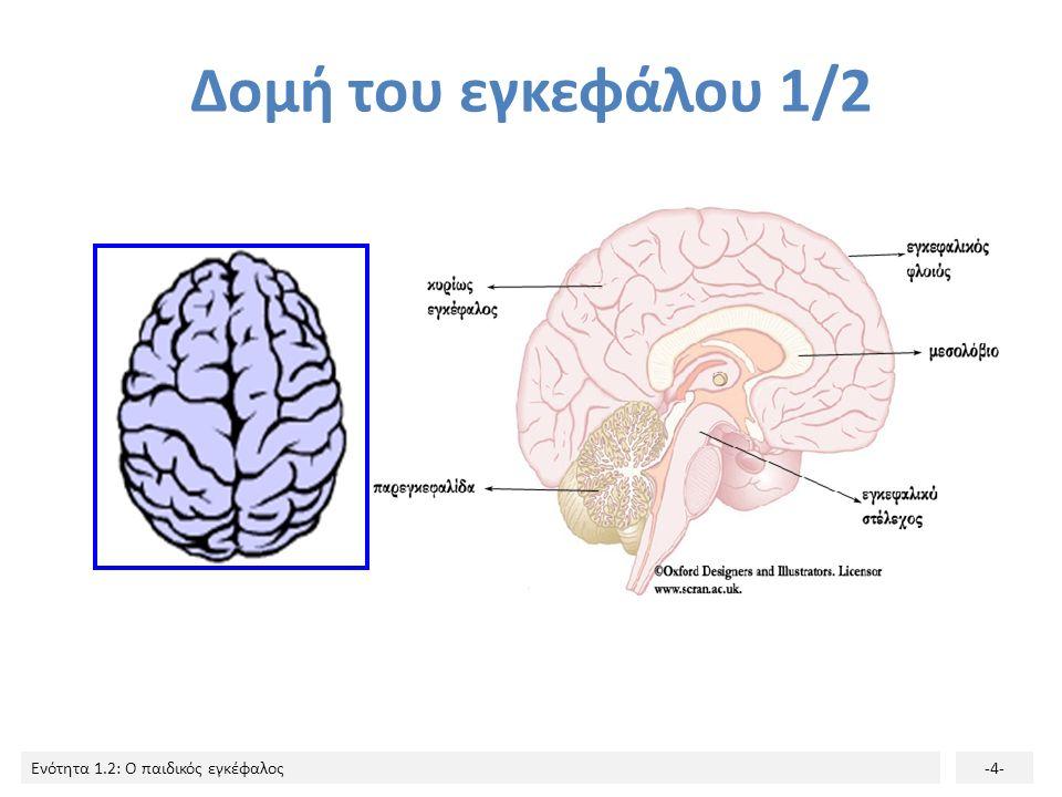 Ενότητα 1.2: Ο παιδικός εγκέφαλος-3- Ο εγκέφαλος ανήκει στο Κεντρικό Νευρικό Σύστημα το πιο πολύπλοκο όργανο του σώματος έδρα της νόησης, του συναισθή