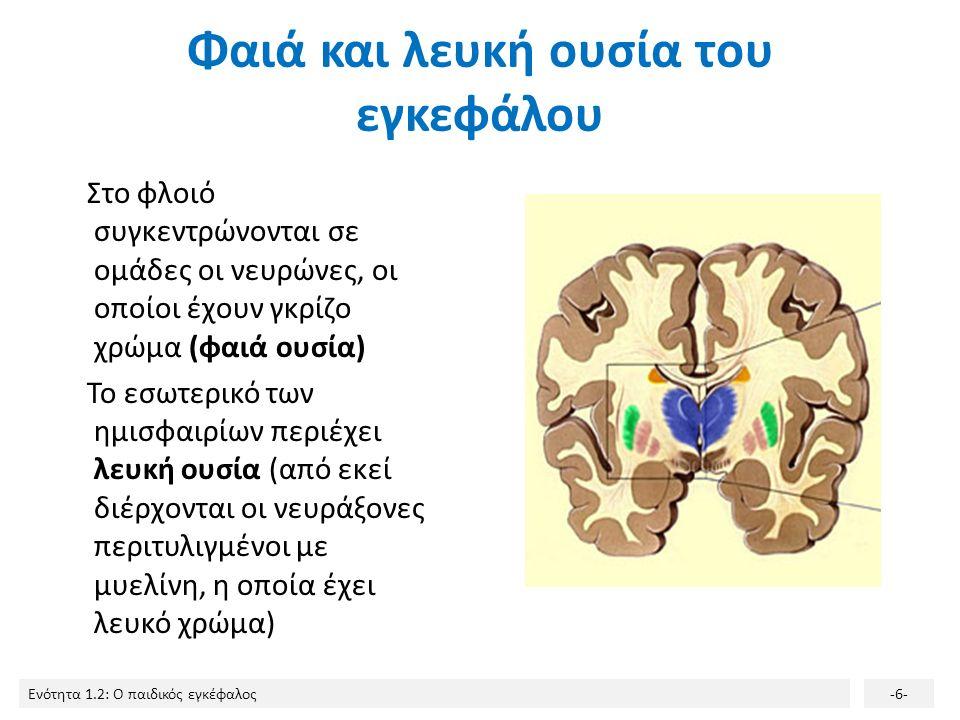 Ενότητα 1.2: Ο παιδικός εγκέφαλος-5- Δομή του εγκεφάλου 2/2 Ο εγκέφαλος αποτελείται από το στέλεχος, την παρεγκεφαλίδα και τα δυο εγκεφαλικά ημισφαίρι