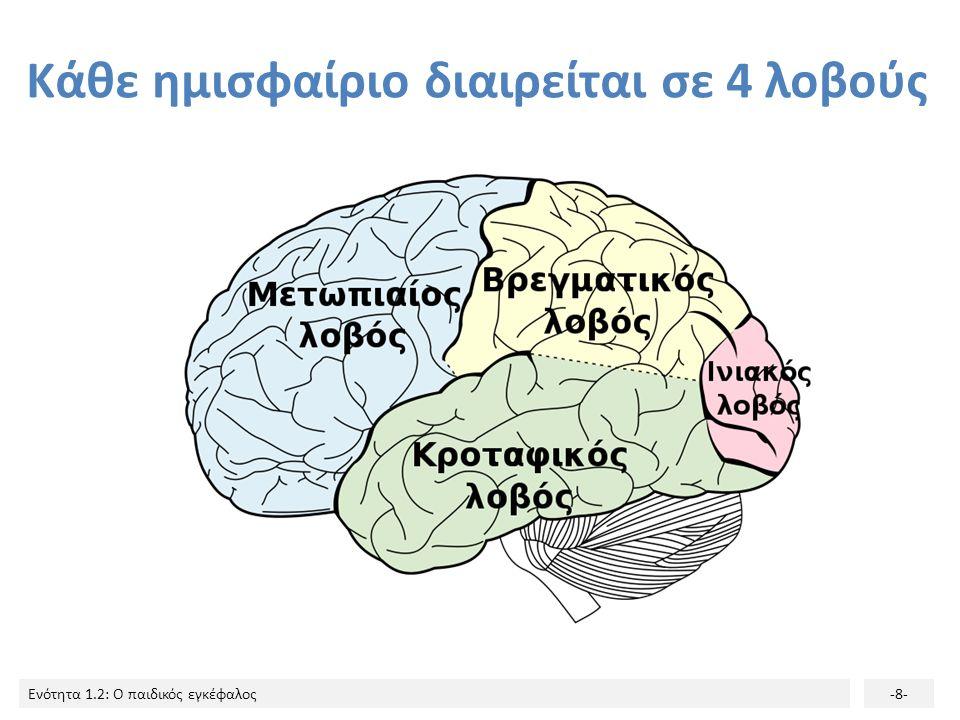 Ενότητα 1.2: Ο παιδικός εγκέφαλος-7- Ο Φλοιός του εγκεφάλου Η πιο αναπτυγμένη και η πιο περίπλοκη εγκεφαλική δομή, περιβάλλει το υπόλοιπο του εγκεφάλο