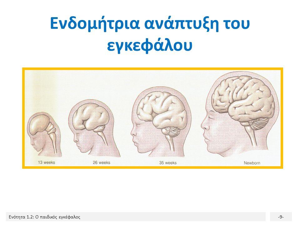 Ενότητα 1.2: Ο παιδικός εγκέφαλος-8- Κάθε ημισφαίριο διαιρείται σε 4 λοβούς